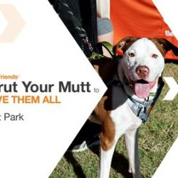Strut Your Mutt Fundraising Event: October 21, 2017