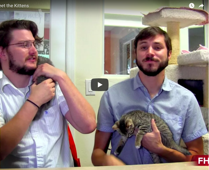 Fountain Hills News Introduces Kittens Angelo and Louis